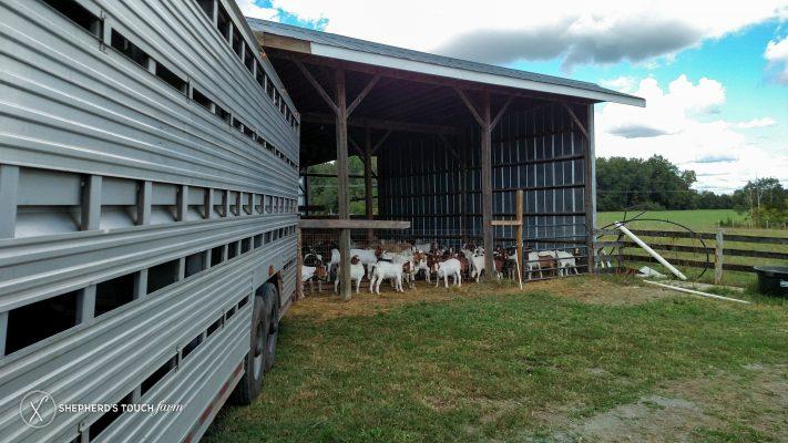 Livestock Transport Mohnton Pa