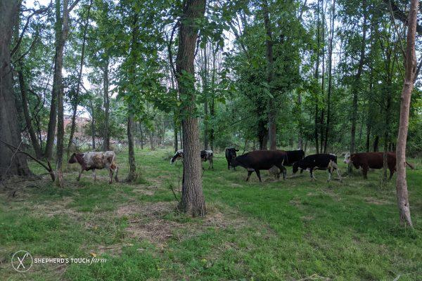 Halal Cow Beef Near Allentown Pa